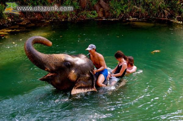 Fürdőzés egy elefánt hátán