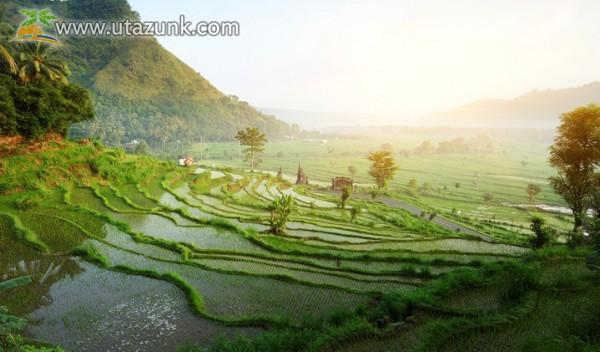 Rizsföldek Balin