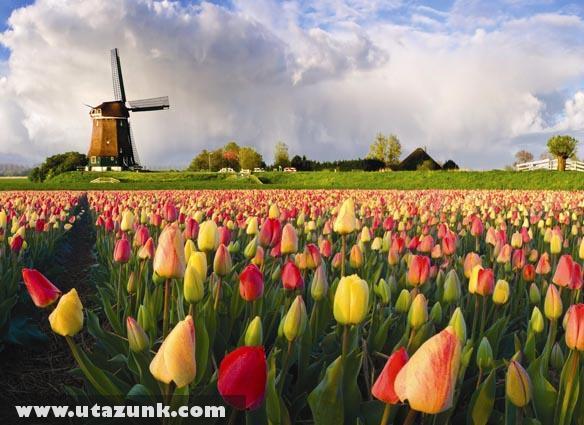 Tulipánmezõ Hollandiában