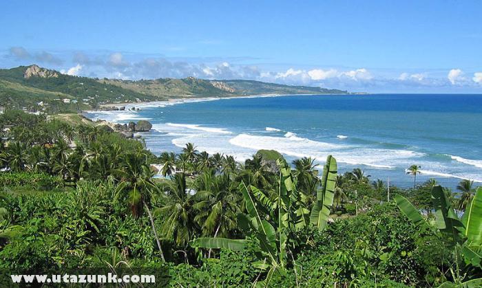 Pálmák és Barbadosz