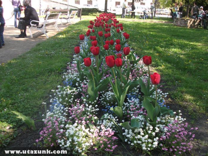 Tulipánágyás Szegeden - Móra Park