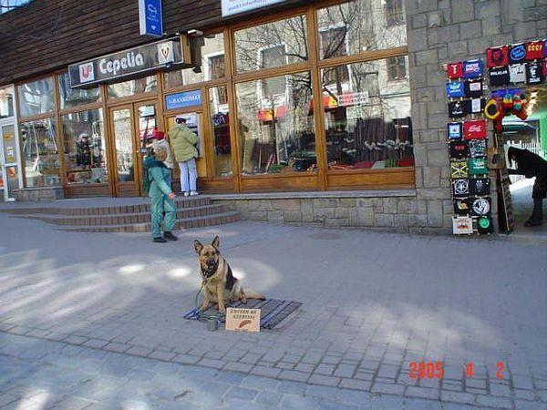 Kéregetõ eb Zakopane sétálóutcáján...