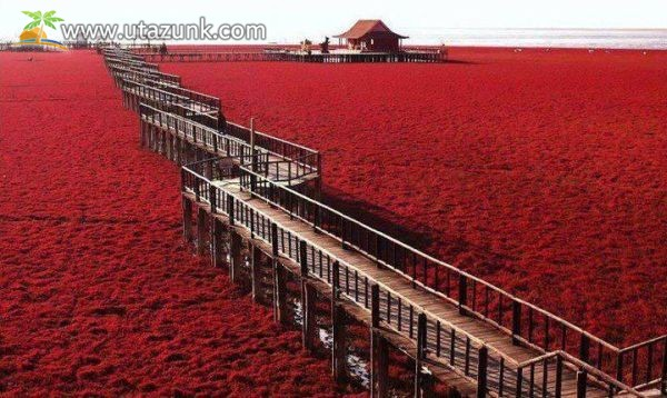 A Liaohe folyó vörös partja