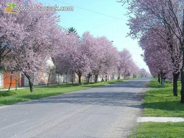 A kétegyházi Dózsa utca tavasszal !