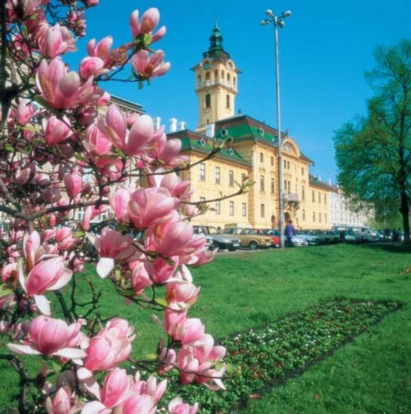 Tulipánfa (liliomfa) a szegedi városháza elõtt