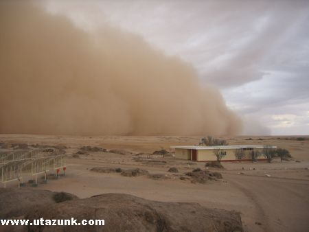 Homokvihar a Namíbiai sivatagban