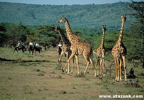 Vadrezervátum Kenyában