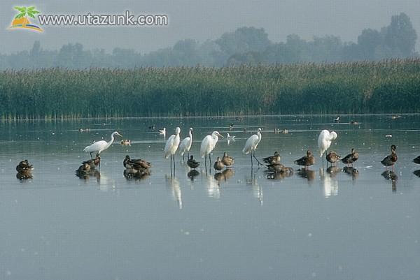 Szegedi Fehér-tó a természeté