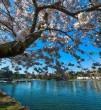 Tavaszodik, virágzás