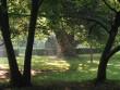 Õsfás park a Wenkheim kastéy körül